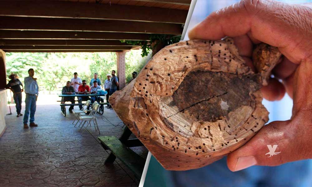 Realizan en Tecate capacitación sobre cómo afecta el escarabajo barrenador a la flora en Parque Encinos
