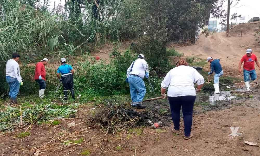 Gobierno de Baja California pide a la ciudadanía prevenir las picaduras de animales de ponzoña