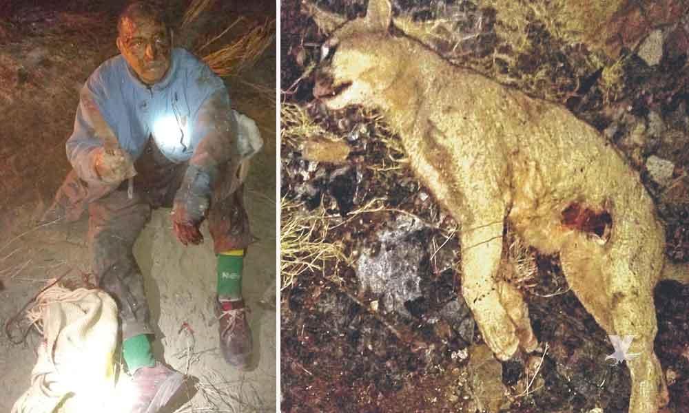 Hombre pelea con un puma para salvar a su perro