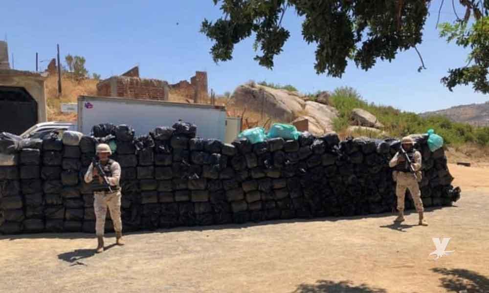 Elementos de Sedena incautan en Tecate 2 toneladas de Marihuana