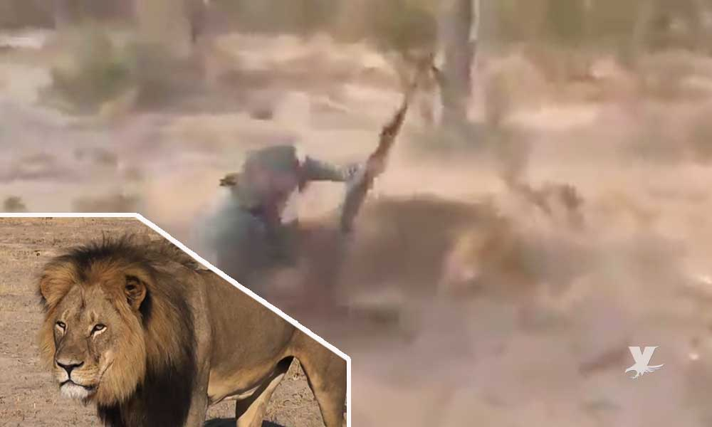 (VIDEO) Cazadores disparan a quemarropa a león y lo matan