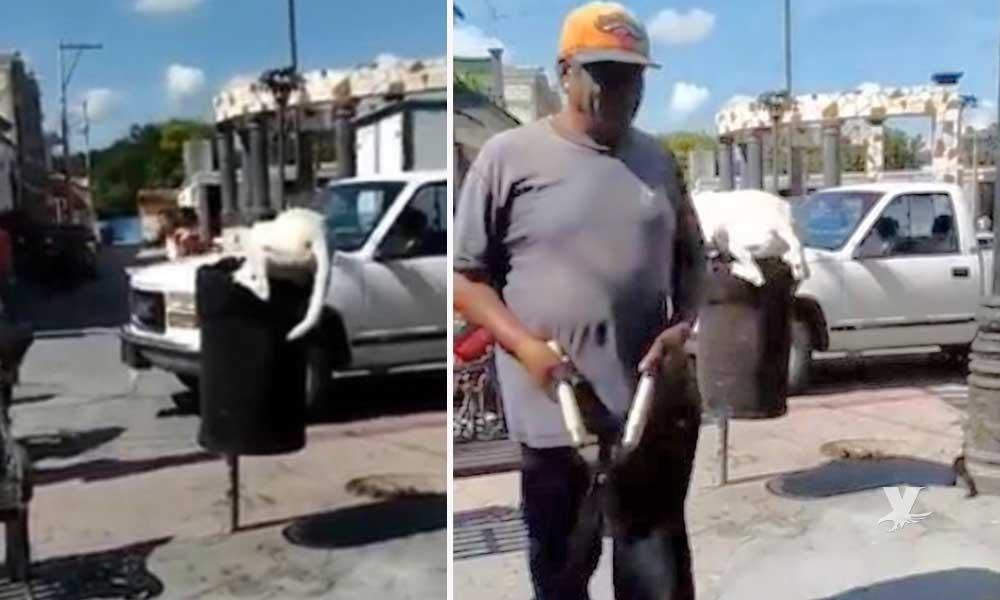 (VIDEO) Hombre corta la cola a un perro con unas tijeras de jardinero mientras buscaba comida en la basura