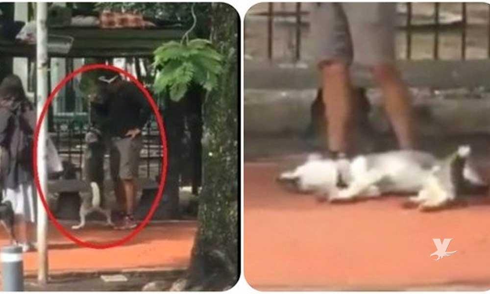 (VIDEO) Entrenador de mascotas es detenido por ahorca a perro Husky