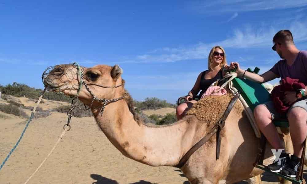 Mujer salva la vida al morderle los testículos a un camello