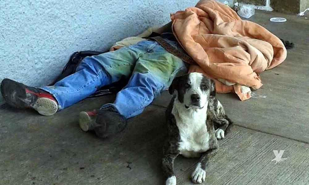 Perro callejero con hambre ingresa a la morgue y devora uno de los cadáveres