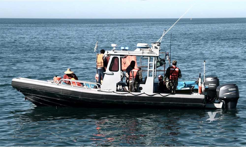 Inicia temporada de pesca de camarón en el Alto Golfo de California