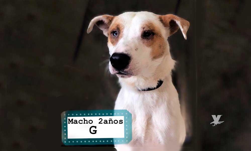 Ayuntamiento de Tijuana promueve la adopción de mascotas
