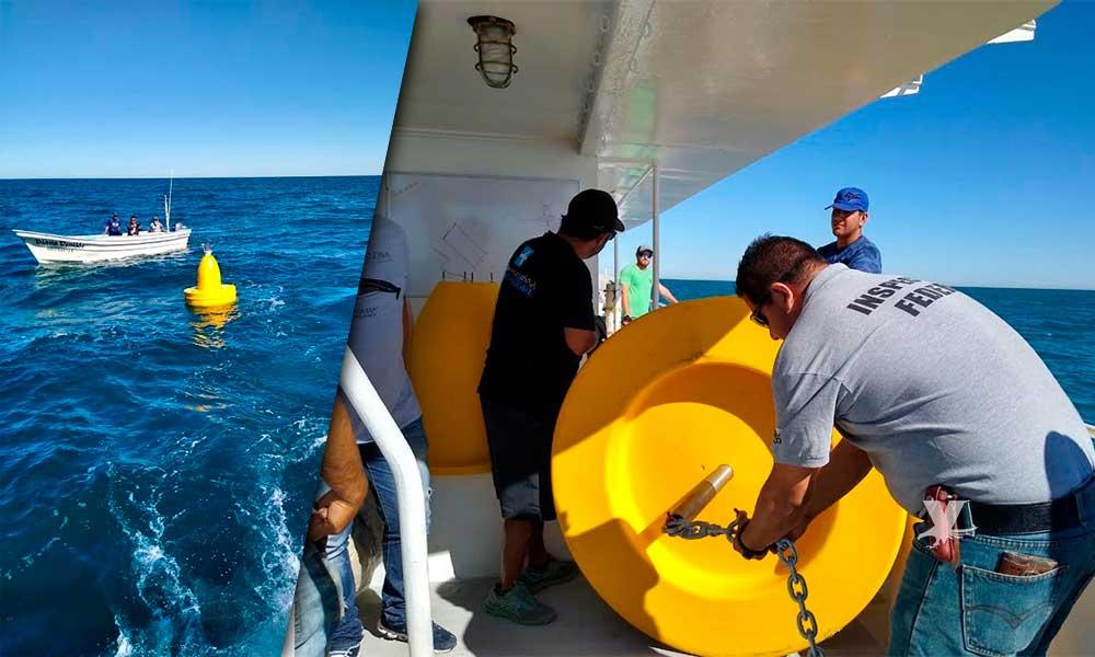 Colocan las primeras boyas de referencia en el área de recuperación de la Vaquita Marina