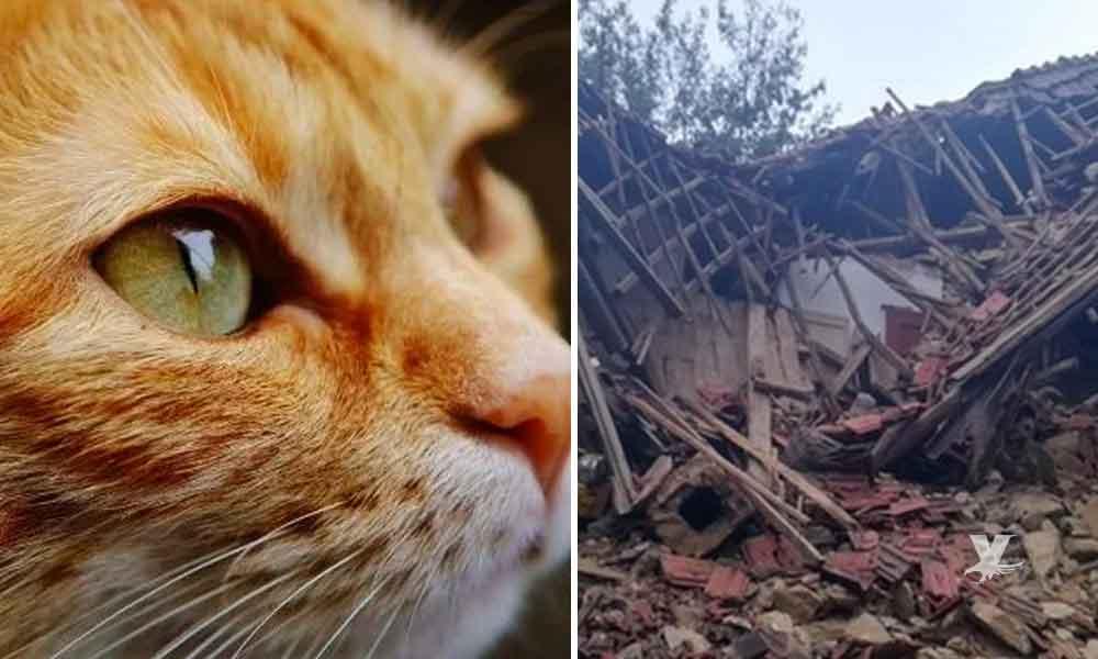 Gatos despiertan a sus dueños minutos antes de que la casa comenzara a derrumbar