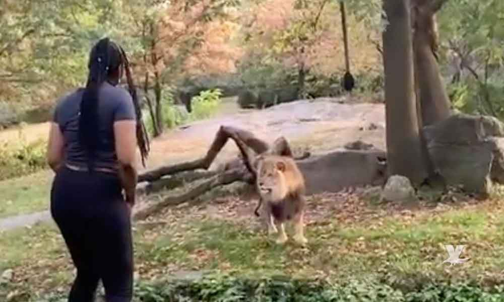 (VIDEO) Mujer entra a jaula de los leones para tomarse una selfie con ellos