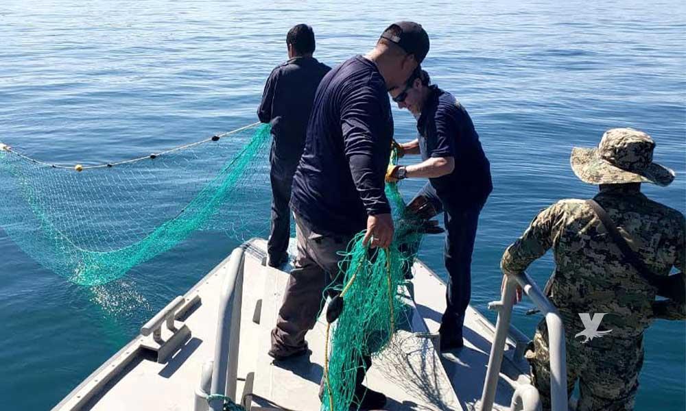 Extrae y asegura Profepa redes totoaberas y para captura de camarón, en recorridos marítimos enSan Felipe