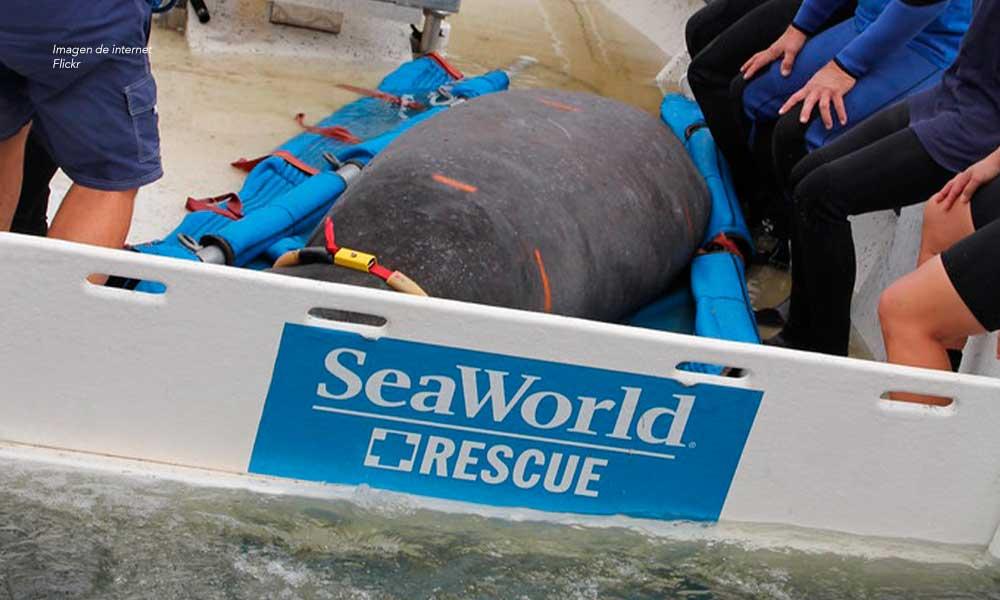 Equipo de rescate de animales de SeaWorld rescata a casi 900 animales en 2019
