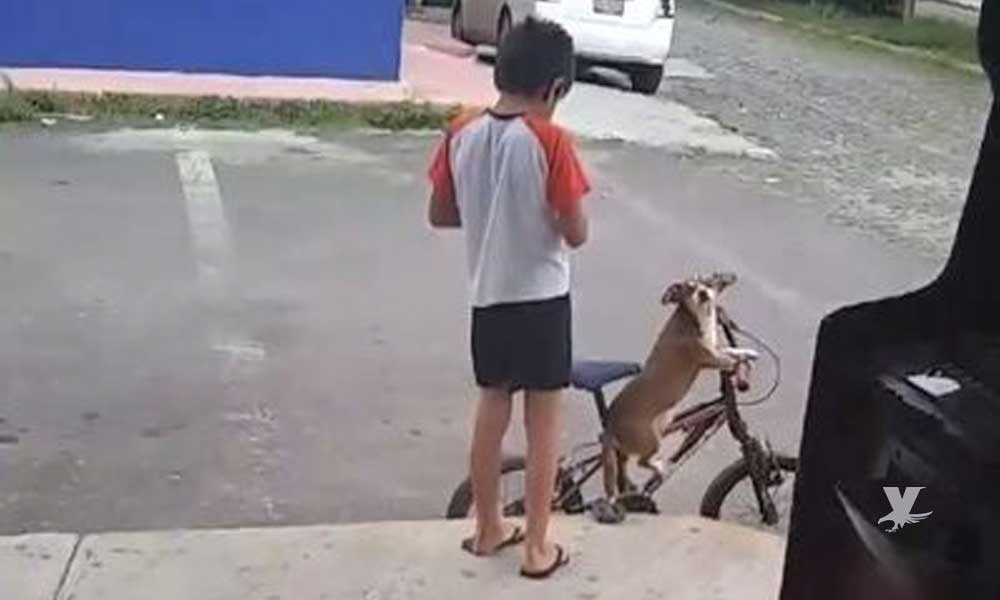 (VIDEO) Niño sale a pasear a su perro en bicicleta