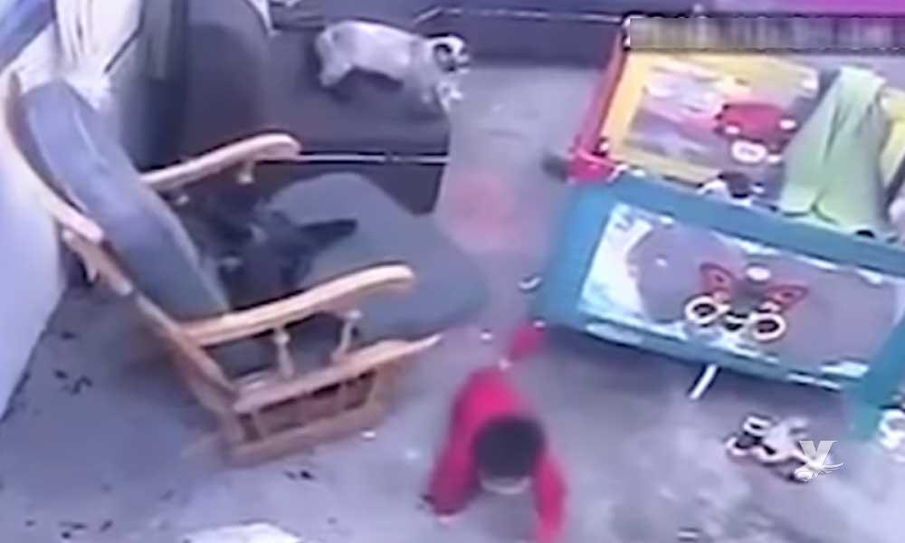 (VIDEO) Gato impide que niño caiga por las escaleras después de bajar de su cuna