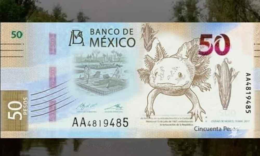 Filtran el que podría ser el nuevo billete de 50 pesos