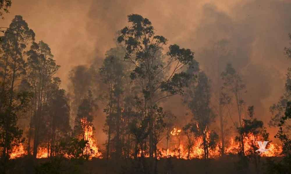 Tres menores de edad son los responsables de los incendios en Australia