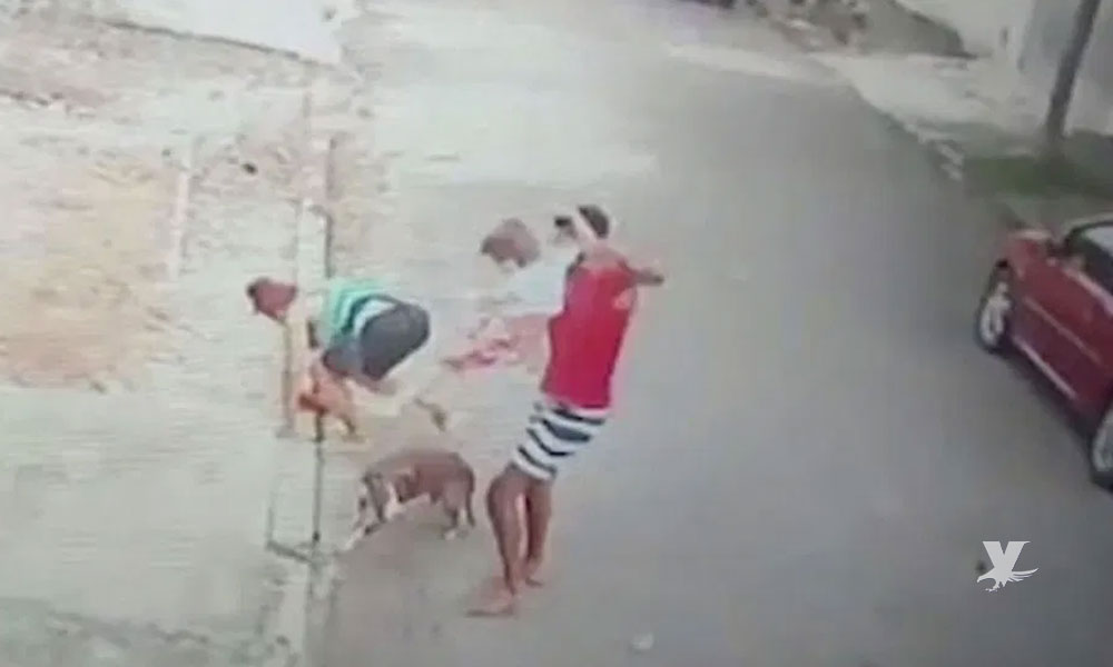 (VIDEO) Hombre rescata a niño que era atacado por un perro pitbull