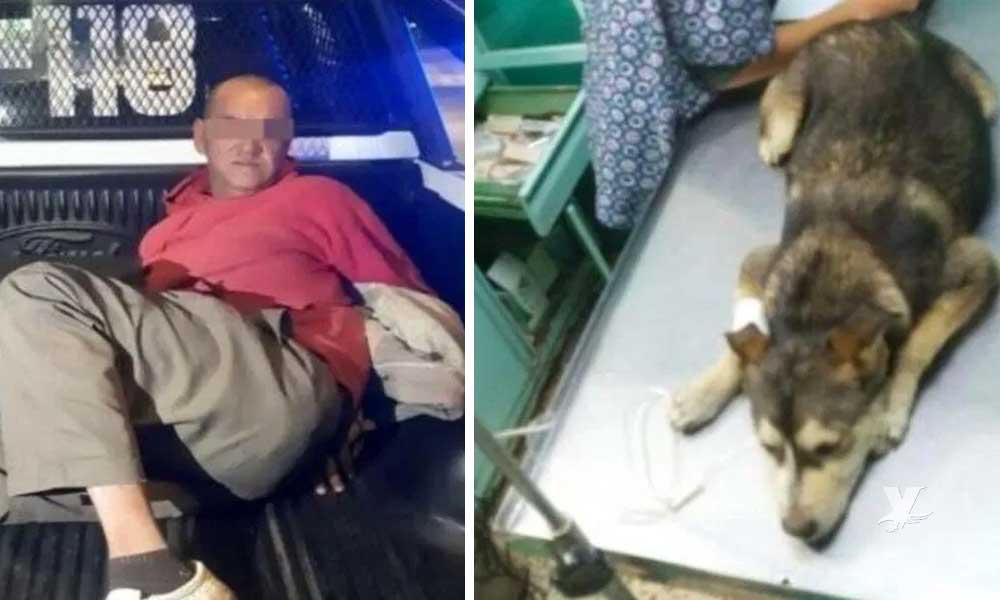 Muere perrita que fue abusada por un hombre de 53 años en México
