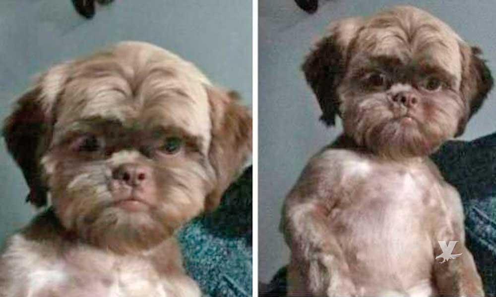 Se vuelve viral foto de perro-niño y las redes sociales no pueden creerlo