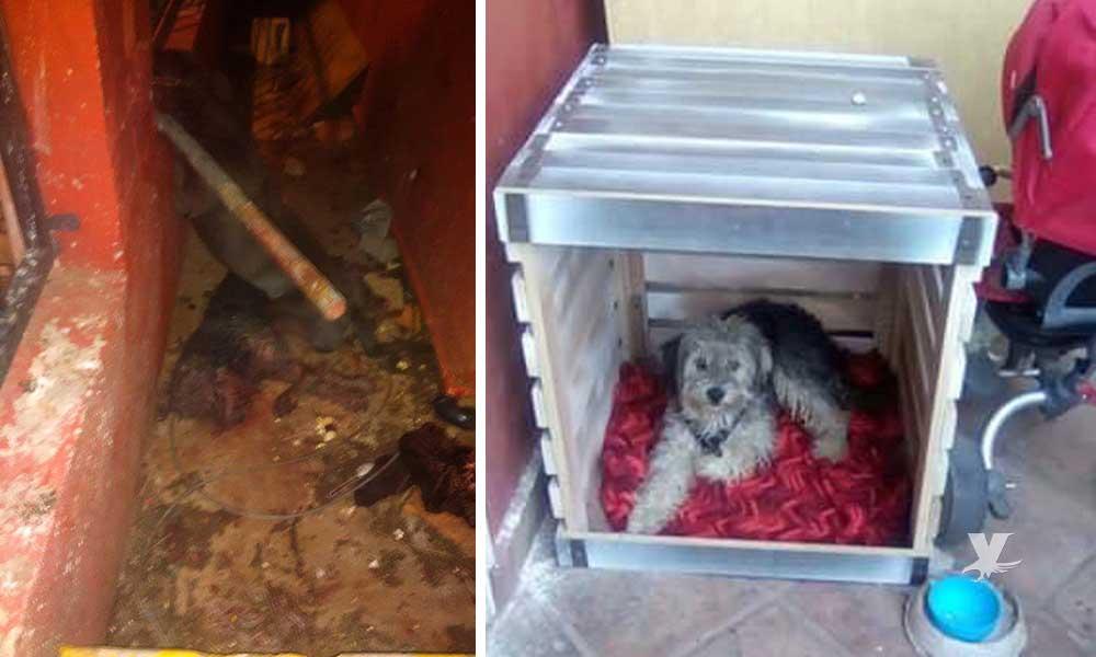 Pitbull ataca a niño en Tecate, la mascota del menor intervino perdiendo la vida