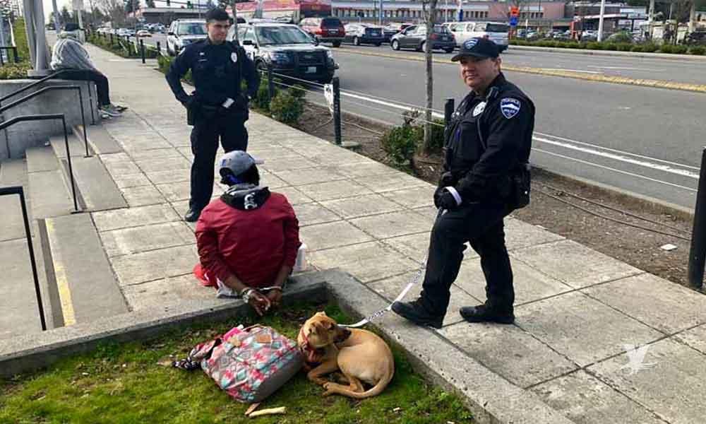 Detienen a hombre que robó un perro para regalarlo a su novia por el 14 de febrero