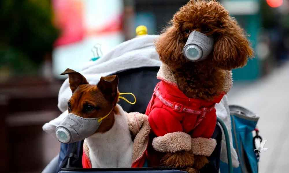Confirman primer caso de Coronavirus en una mascota