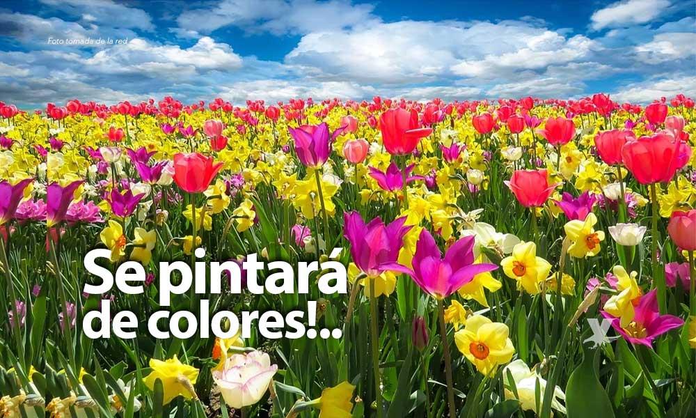 La Primavera iniciará el próximo 19 de marzo
