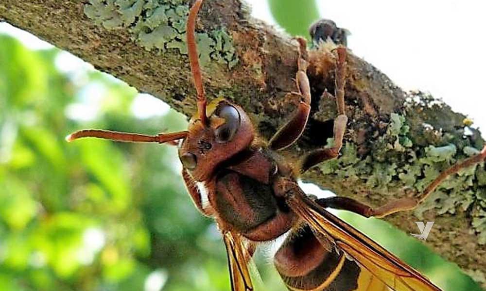 Secretaría de Agricultura pide a los productores de Baja California vigilar sus apiarios