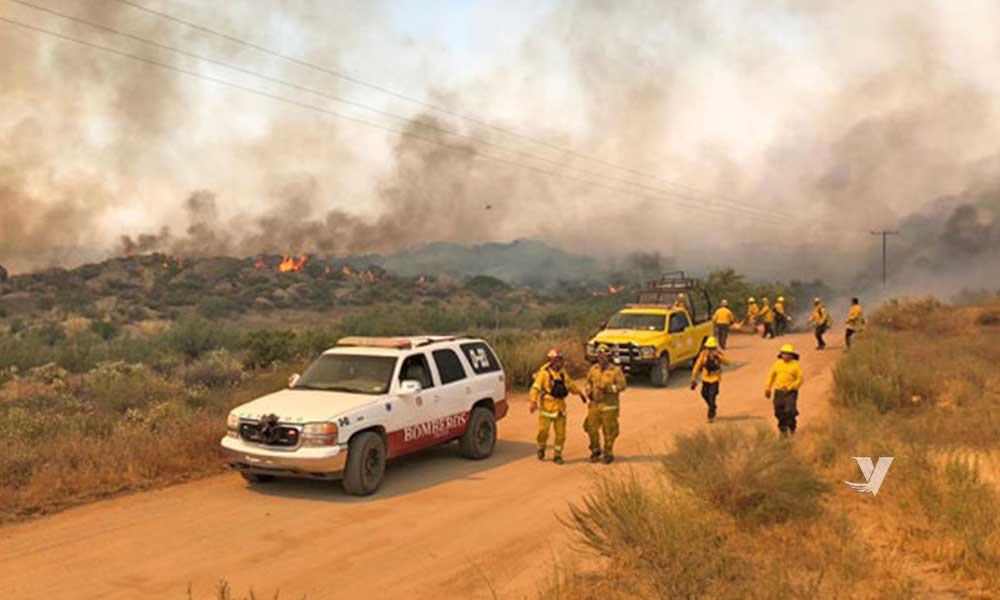 Controlan en un 70% incendio forestal de Valle de las Palmas