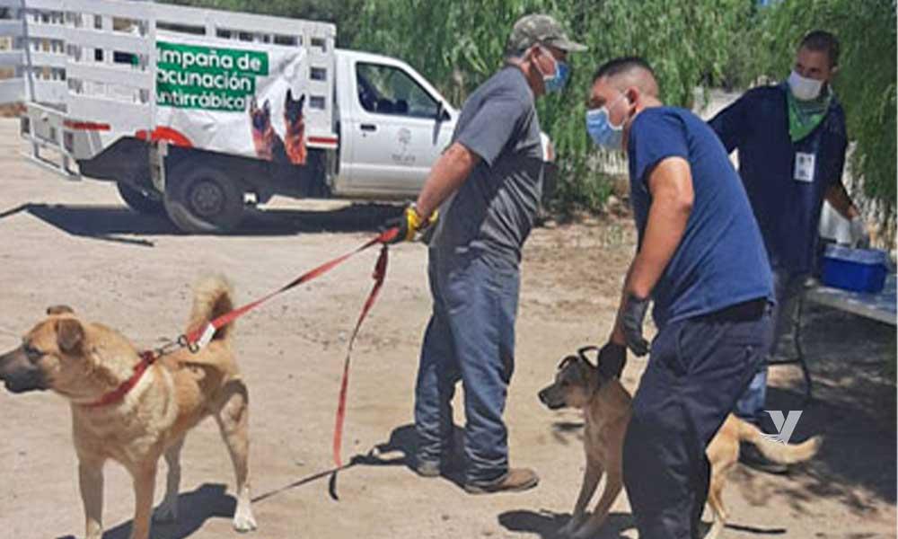 Aplica Centro Antirrábico Municipal 204 vacunas en Delegación Mi Ranchito