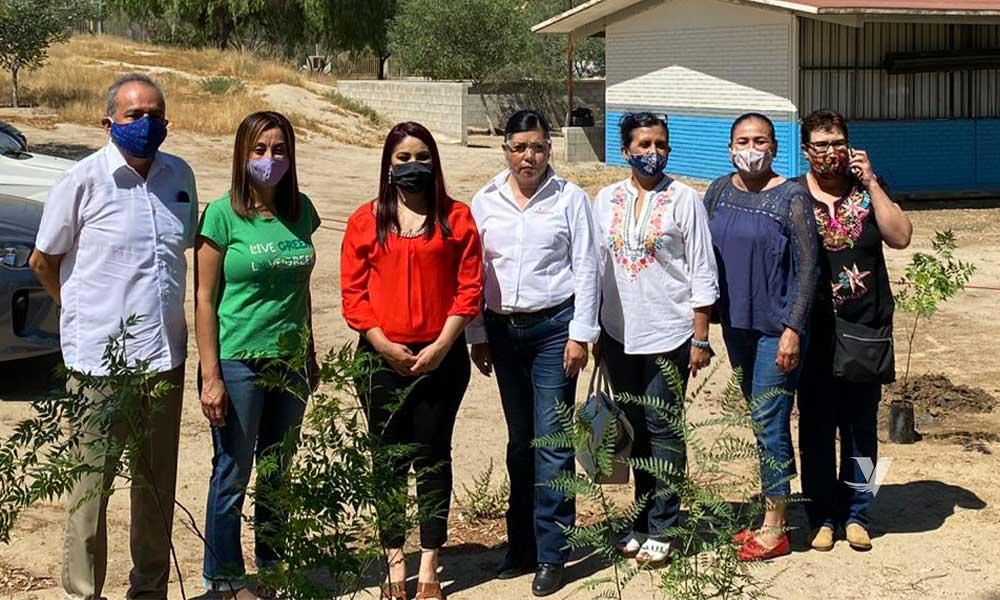 Entrega Dirección de Protección al Ambiente 175 arboles, durante campaña de reforestación