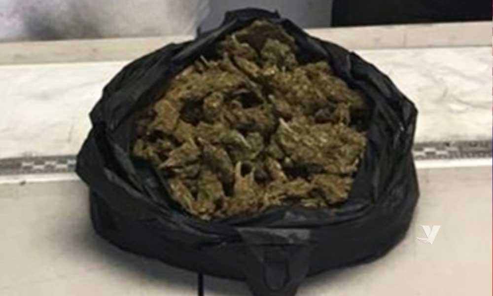 Incauta FGE más de medio kilo de marihuana