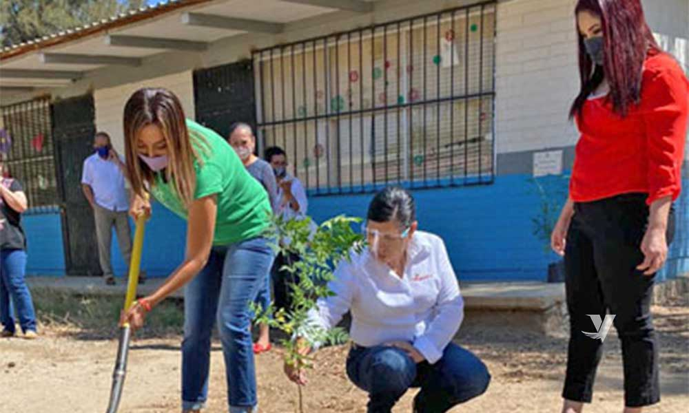 Realiza la Dirección de Protección al Ambiente campaña de reforestación en Tecate