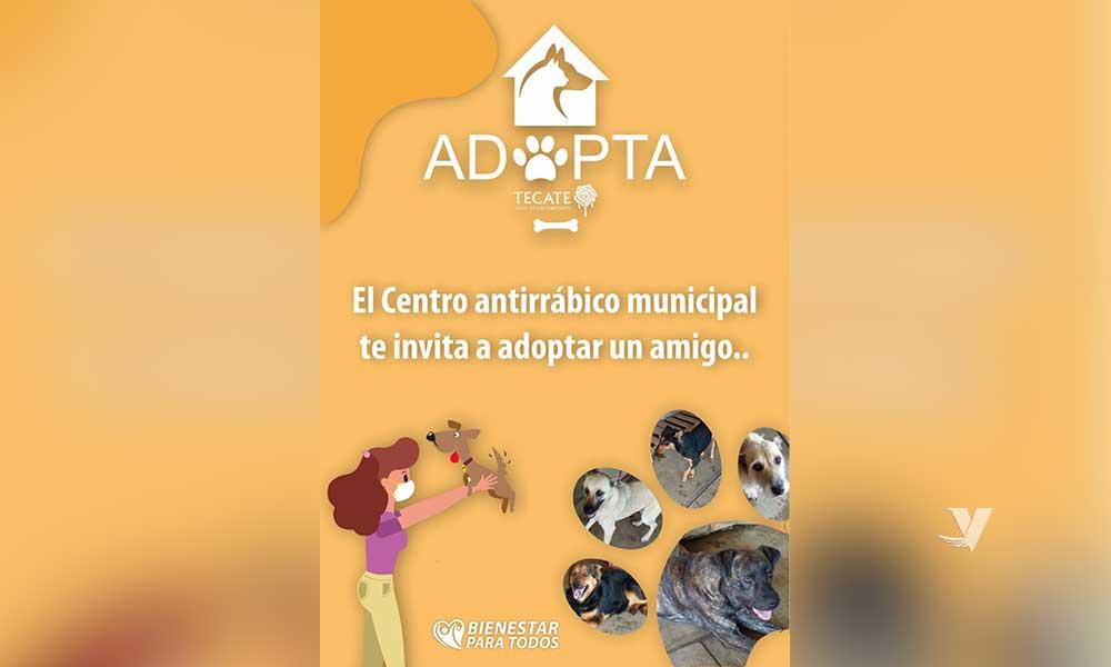 Centro Antirrábico Municipal te invita a realizar la adopción de una mascota