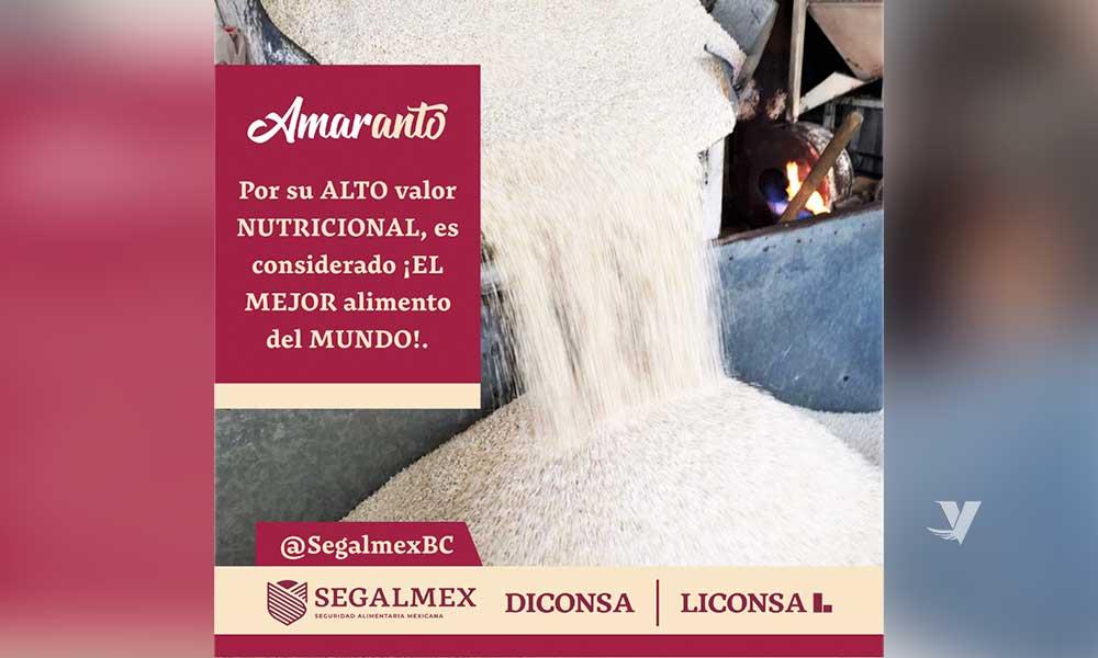 El amaranto de segalmex-diconsa y sus grandes bondades alimenticias