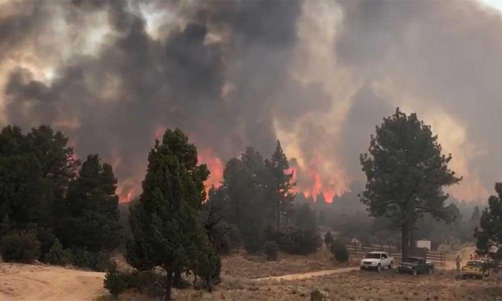Brigadistas continúan combatiendo incendio forestal en Sierra de Juárez