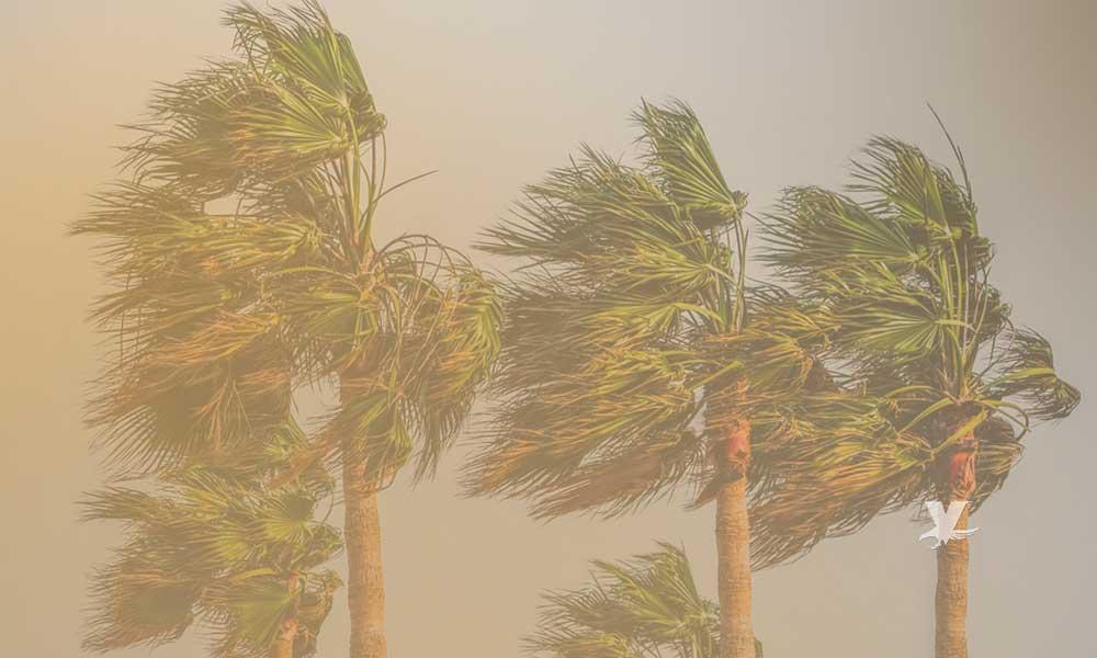 Pronostican vientos Santa Ana a partir de mañana martes