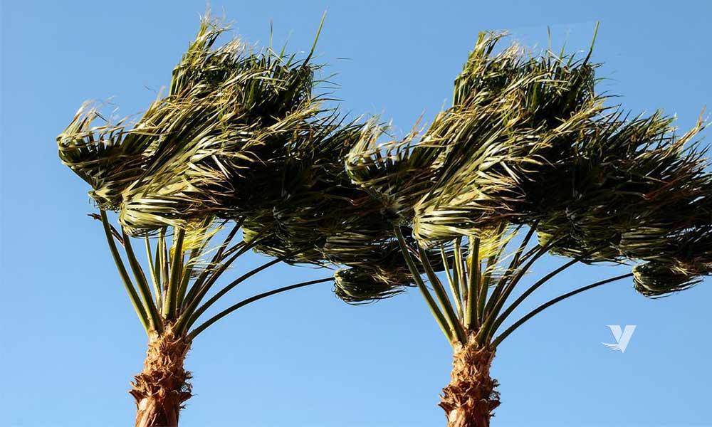 Pronostican vientos de Santa Ana para los días 8 y 9 de Septiembre