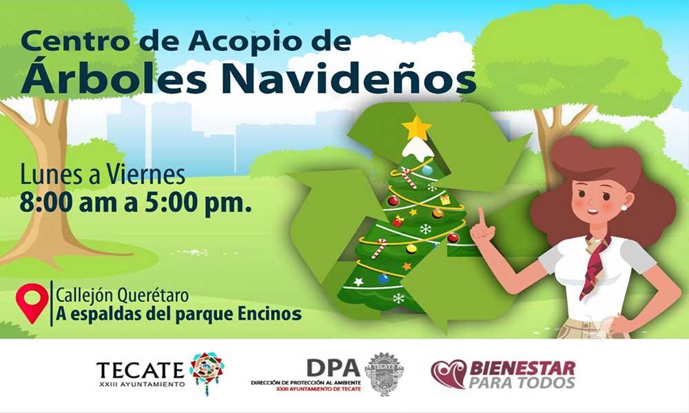 El XXIII Ayuntamiento de Tecate habilita  centro de acopio para arbolitos navideños