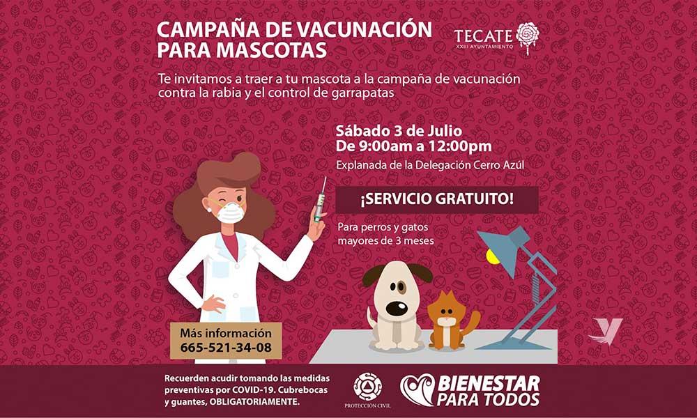 Invitan a jornada de vacunación para mascotas en Delegación Cerro Azul el próximo sábado 3 de julio